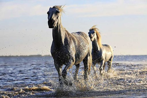Effective organic supplements for horses