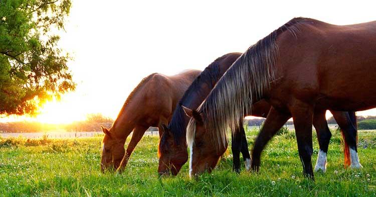 Detoxing Horses